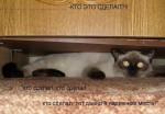 http://thumbnails34.imagebam.com/10494/181340104933769.jpg