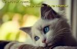 http://thumbnails34.imagebam.com/10494/292454104933778.jpg