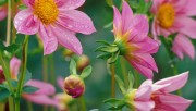 Flowers and Gardens HQ wallpapers Collection 2 3f7bdb108363348