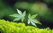 Green Plants Birth HD Wallpapers Ca786b108974904