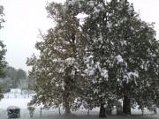 The Snow 2010 3204c8110168352